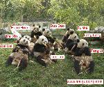 Olympic_Panda_Group_Photo