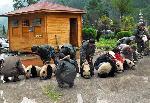 Wolong earthquake pandas rescued